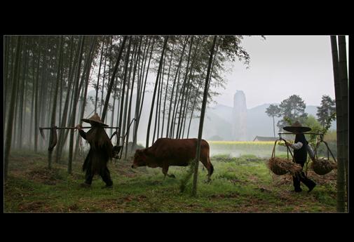 Film of Xiandu Scenery