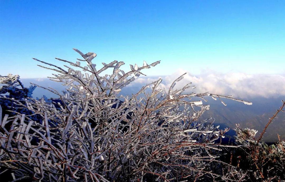 美轮美奂!缙云大洋雾凇今冬首现身